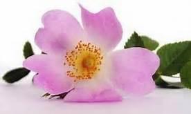 Salute e Benessere - Benefici Olio di rosa mosqueta