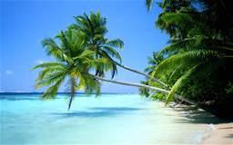 Salute e benessre albero cocco