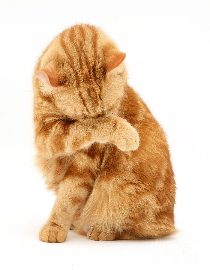 Il bagno al gatto ed al coniglio va fatto senza linea comunicati stampa pet community and - Fare il bagno al gatto ...